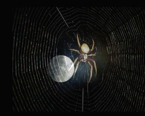 spider-moon